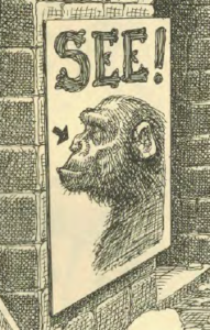 See ape nose
